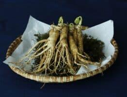 Le bienfaits du Ginseng