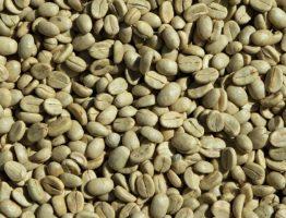Connaissez vous les vertus du café vert?